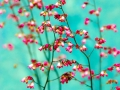 filigran-orchids